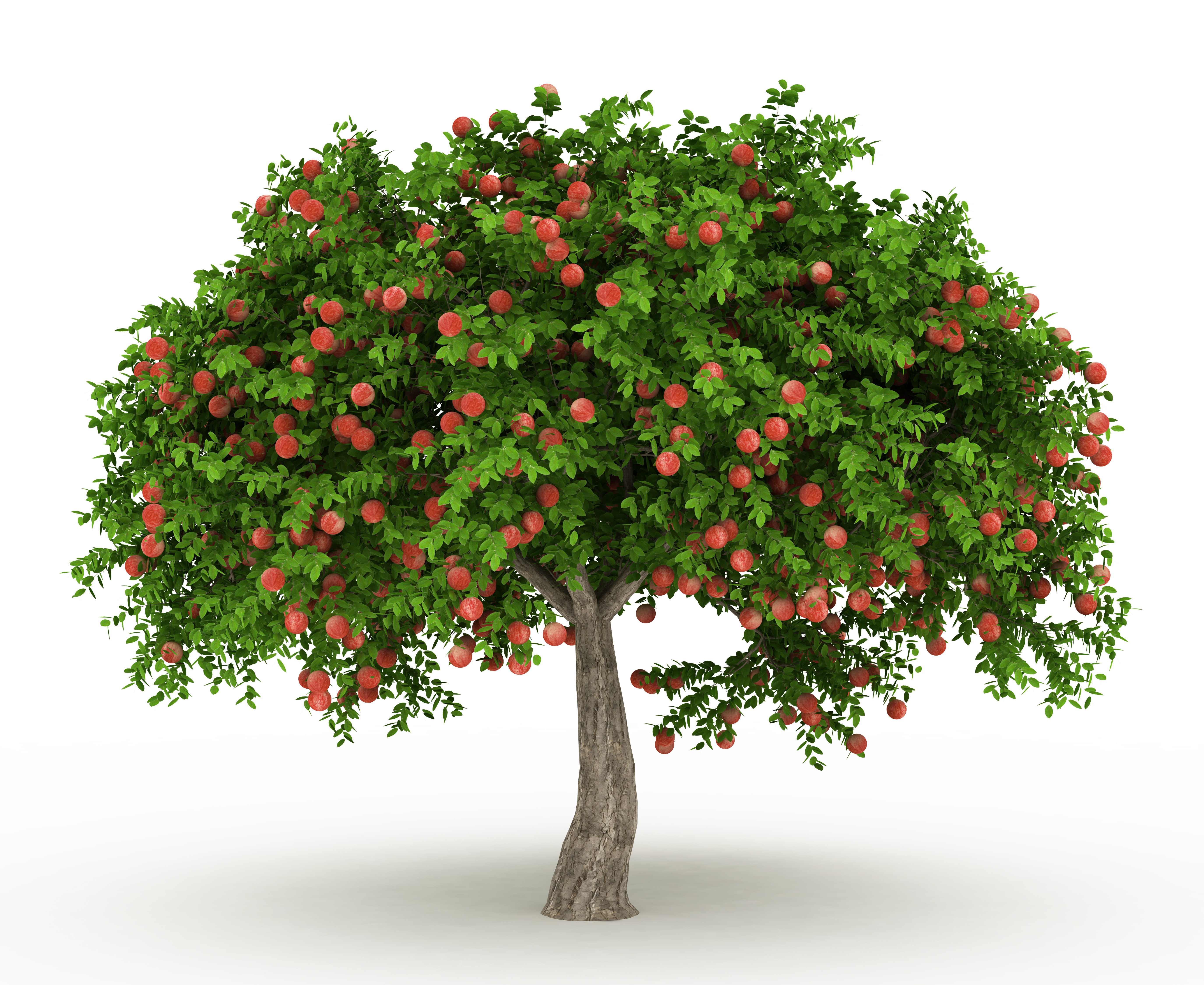 tree with fruits